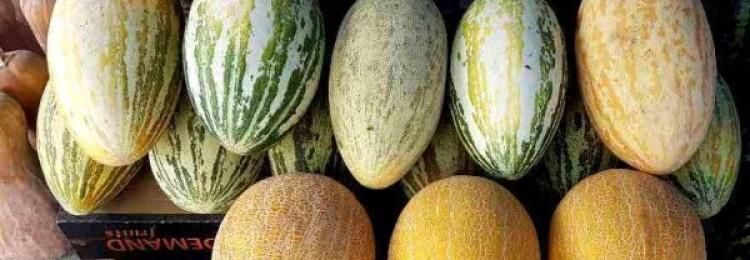Дынные сорта: самый полный гид по желтым тыквинам