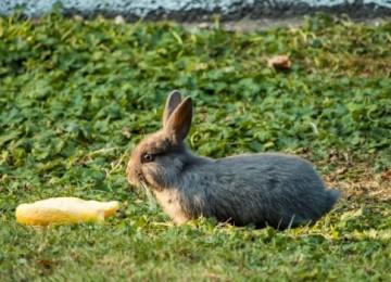 Можно ли кроликам дыню?