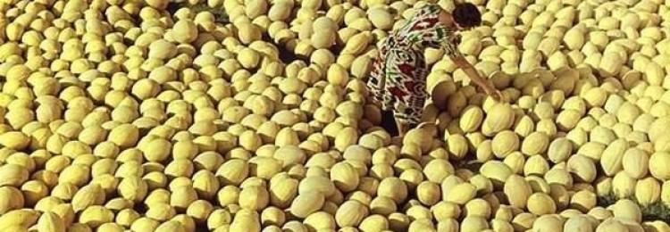 Узбекские сорта дынь