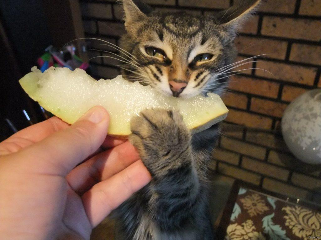 можно ли кошкам дыню