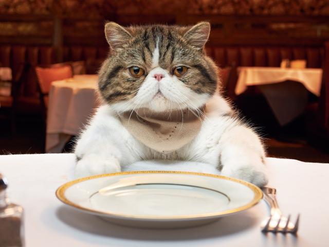рацион кошек