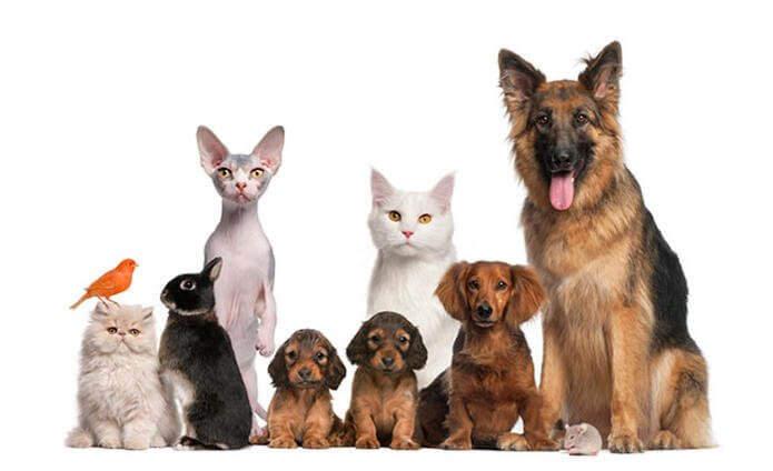 эритрит для животных