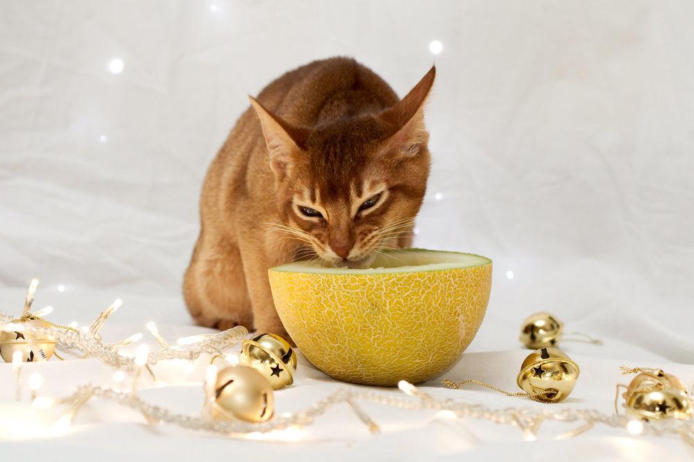 можно ли кошке дыню